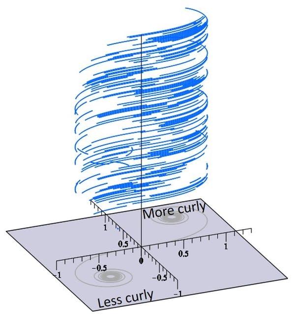 Euler spiral of rat whiskers