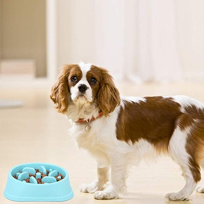 NOYAL Dog Slow Feeder Bowl