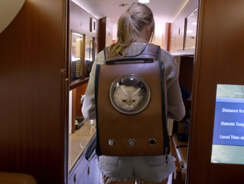 """Taylor Swift's cat backpack from """"Miss Americana"""" is available on Amazon."""