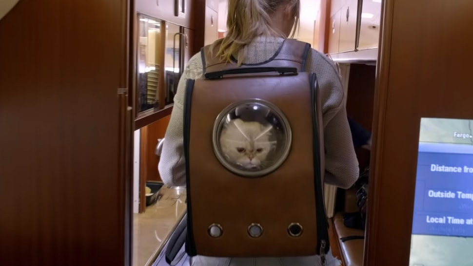 "Taylor Swift's cat backpack from ""Miss Americana"" is available on Amazon."
