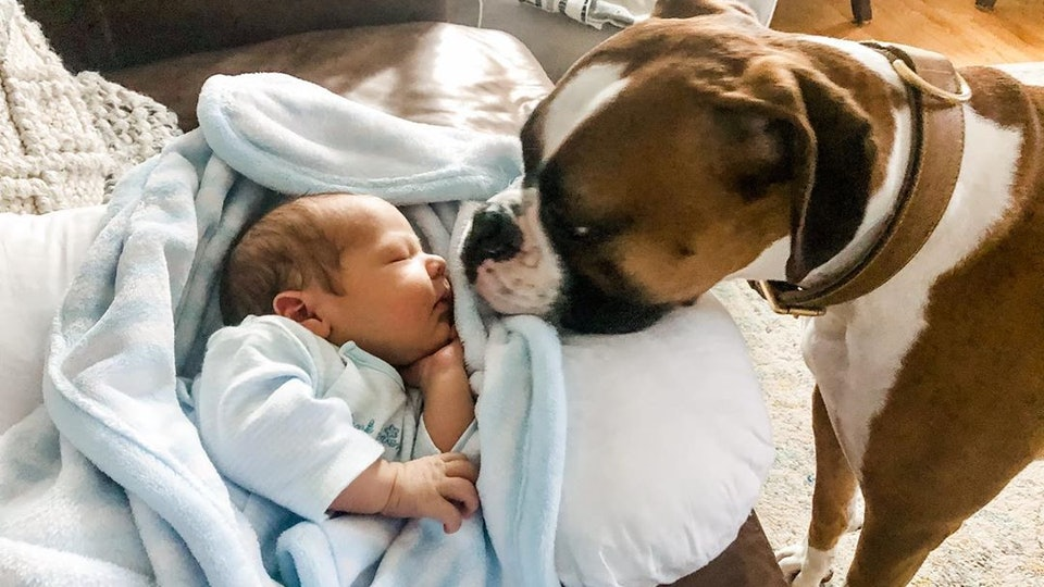 These photos of dogs meeting babies for the first time will melt your heart and brighten your day.