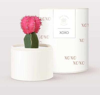XOXO Cacti Garden