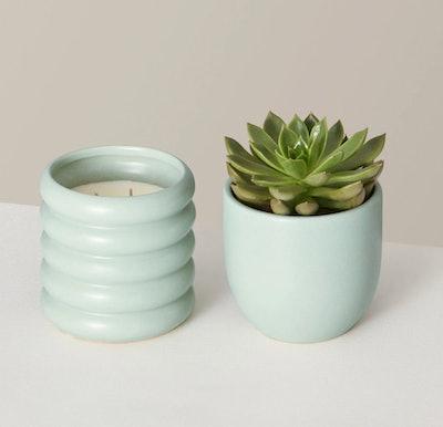 Succulent & Dolores Soy Candle