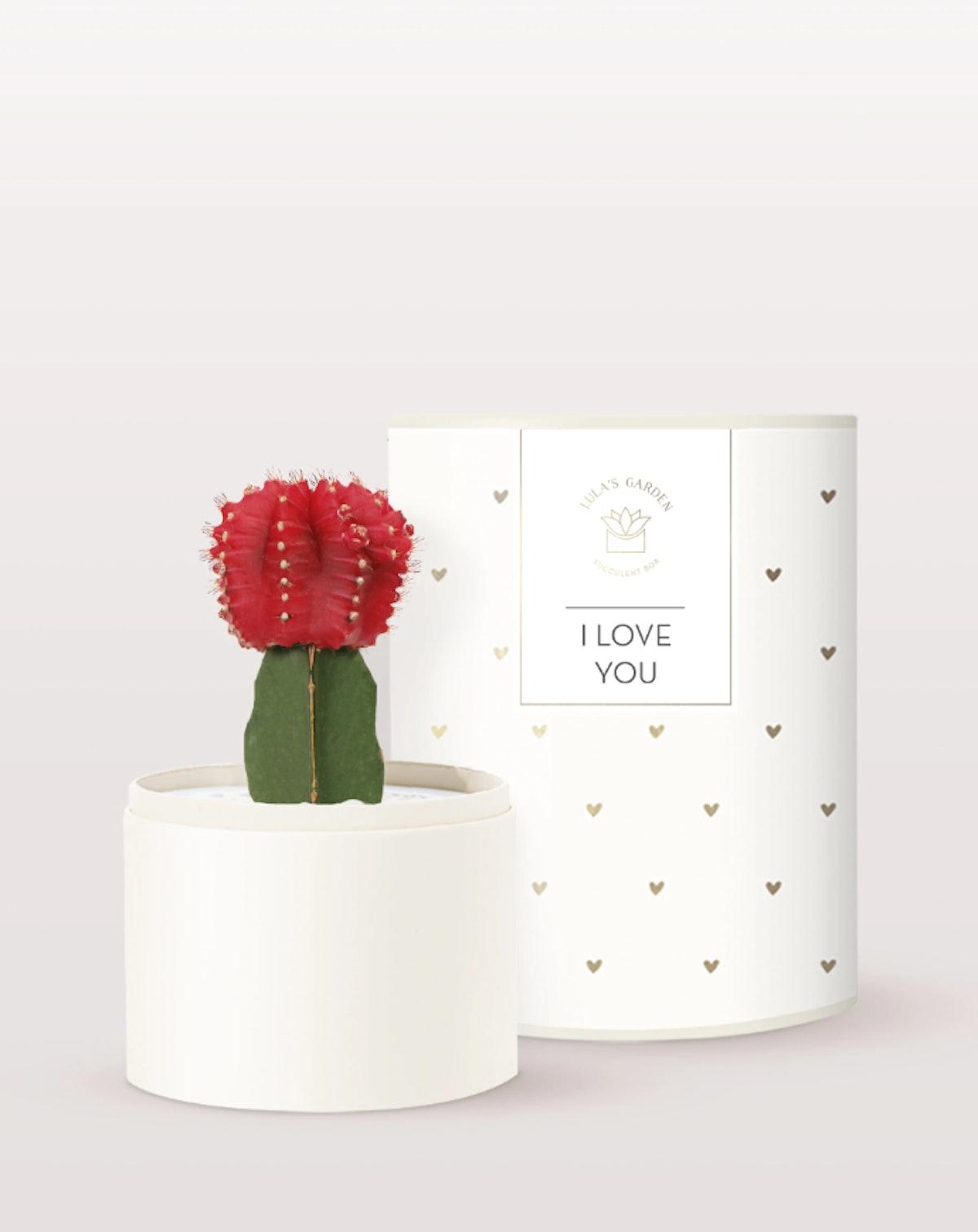 Love Cacti Garden