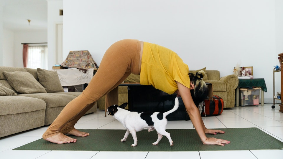 A pregnant person stretches in down dog over a cat