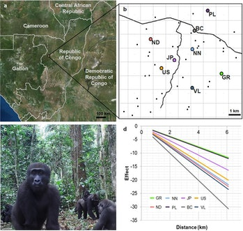 image showing map, charts, and photo of lowland gorilla