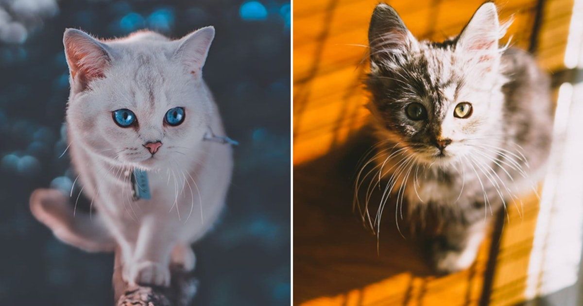 7 Best Cat Instagram Accounts To Follow For Cuteness Right Meow