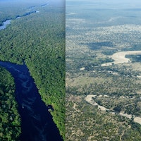 Huge ecosystems could collapse in less than 50 years – new study