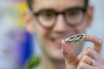 Researcher Daniel Field with a 3D printed model of the Wonderchicken skull.