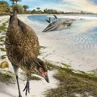 Meet the 'Wonderchicken,' the oldest-ever bird fossil discovery