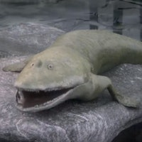 This ancient fish with arms might be the reason you have hands