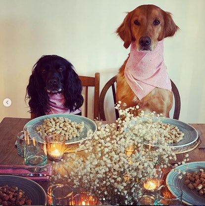 James Middleton's idea of a social distancing dinner party with dogs is the greatest thing ever.