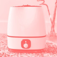 This magic humidifier saved my sinuses, skin, and plants