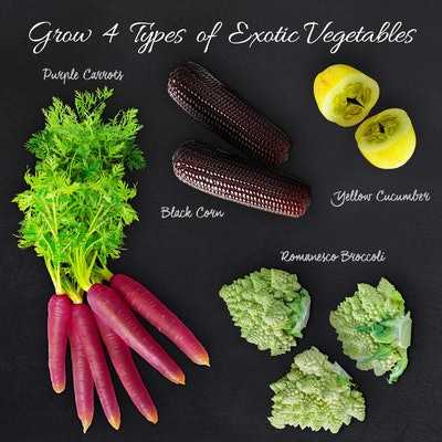 Nature's Blossom Vegetable Growing Kit