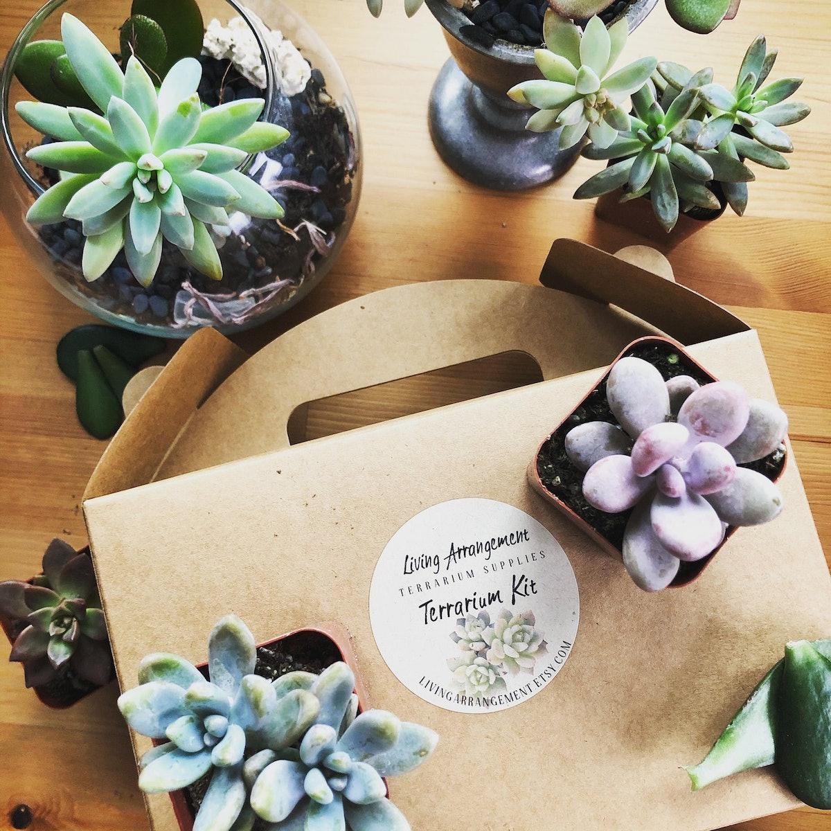 DIY Terrarium Building Kit Complete for Succulents