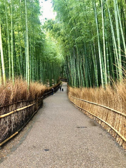 A forrest trail in Kyoto, Japan is lined with bamboo trees.