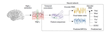 double neural network brain