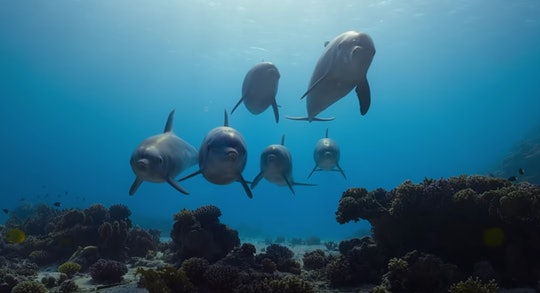 Disney+ will debut a new dolphin docuseries narrated by Natalie Portman on the streaming platform on April 3.