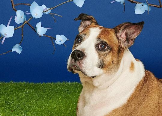 Senior shelter dogs pose for superlative photos