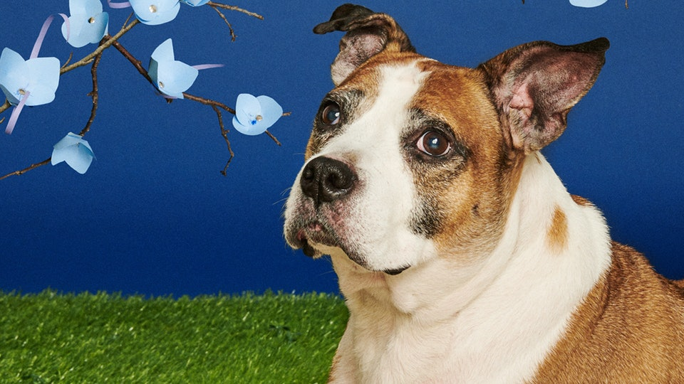 Senior shelter dogs pose for superlative photos