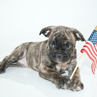 Could a dog pick the next president?