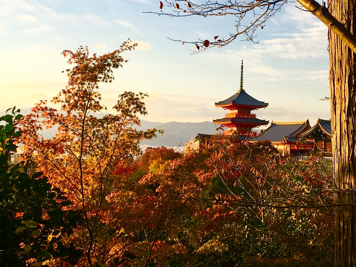 A picturesque view of Kyoto, Japan showcases a temple behind bushes and trees on a sunny day.