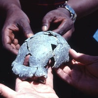 Homo erectus study reveals 4 new facts about this ancient human