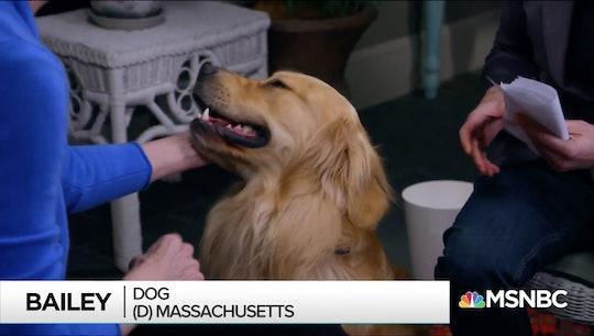 Elizabeth Warren's dog Bailey swiped a burrito at her campaign office.