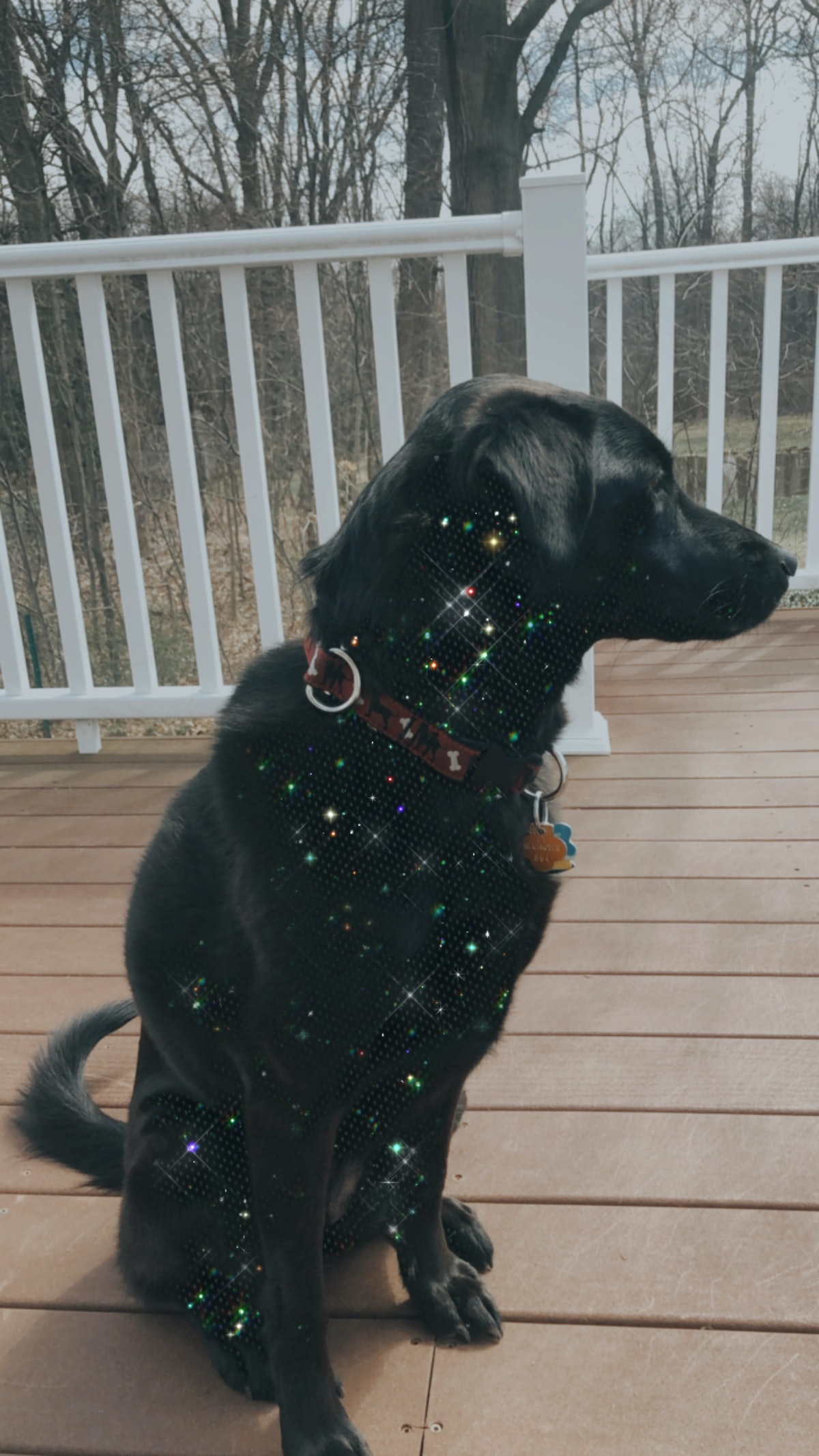 A dog sits on a porch with a glitter effect applied to its fur.