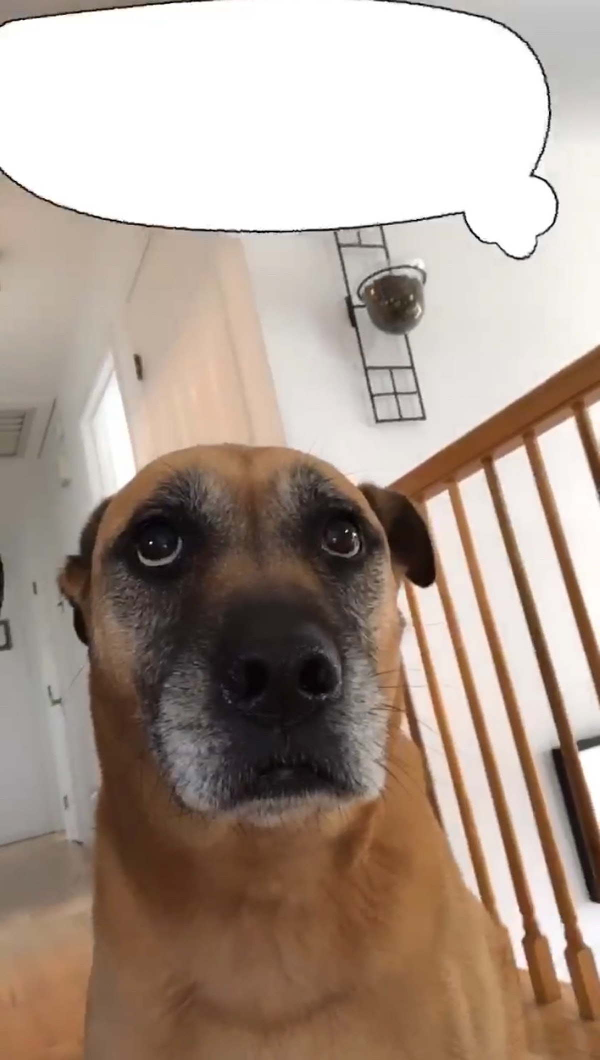 A dog looks up at a thought bubble over its head.