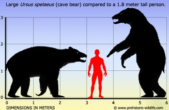 graphic showing size of cave bear compared to human