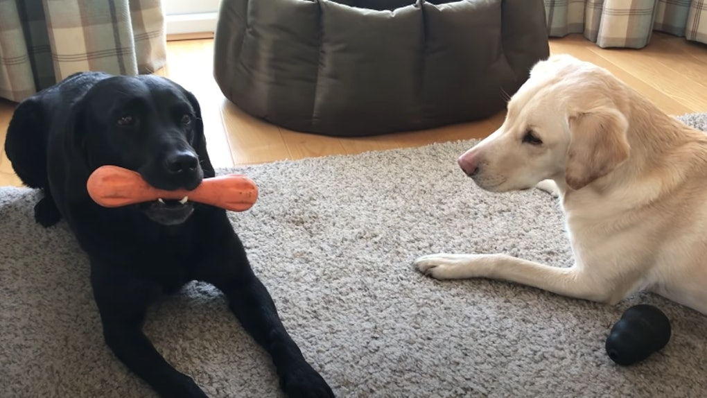 "This video of two dogs' ""bone competition"" is too cute."