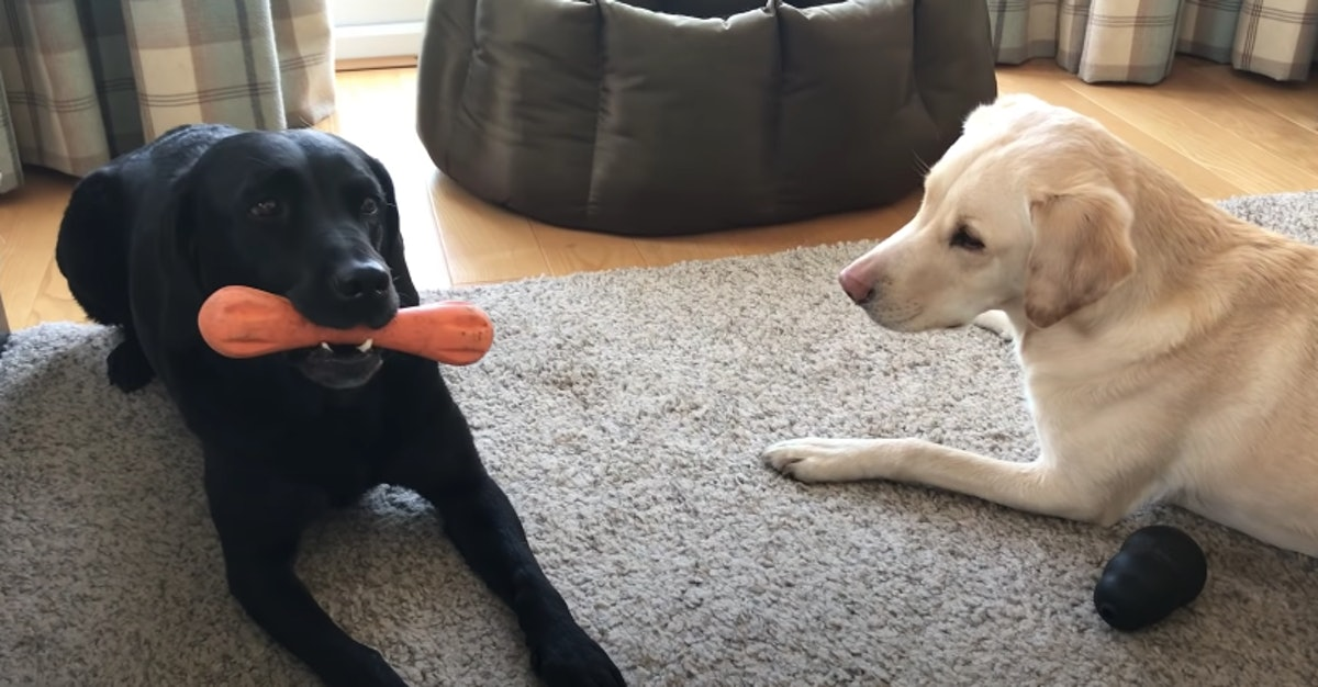 """This video of two dogs' """"bone competition"""" is too cute."""