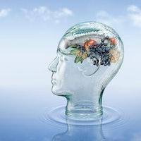 Mediterranean diet: New analysis says it may optimize brain health