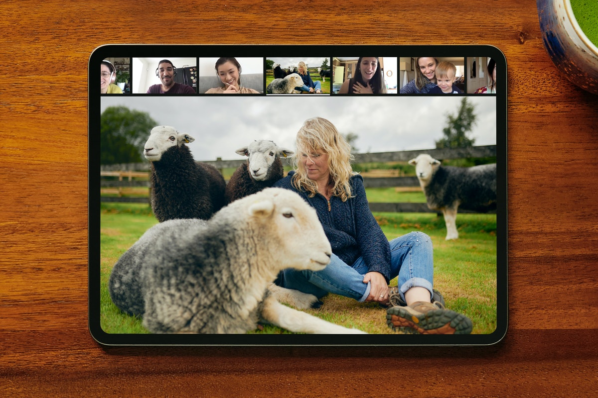Airbnb's new online experiences feature includes a meditation with sheep.
