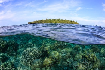 corals growing in shallow waters of Kimbe Bay in Papau New Guinea