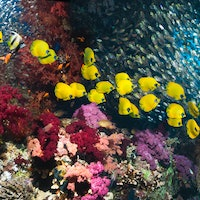 Study reveals 3 ways scientists can save tropical marine life