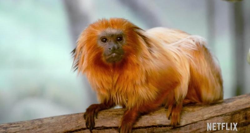 a monkey in Absurd Planet