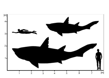 chart showing size of ptychodontid compared against human