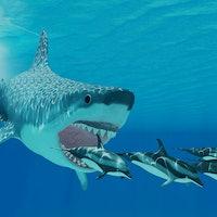 Massive, prehistoric sharks' weird evolution led to their demise