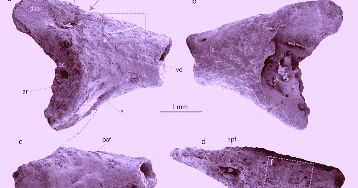 """Explorers in Antarctica find the fossils of a """"totally unexpected"""" animal"""