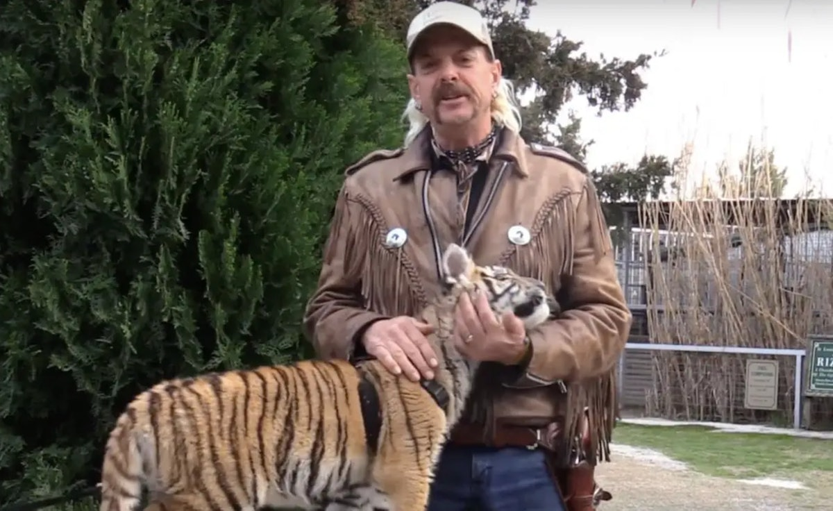 """Here's what happened to Joe Exotic's tigers after Netflix's """"Tiger King"""""""