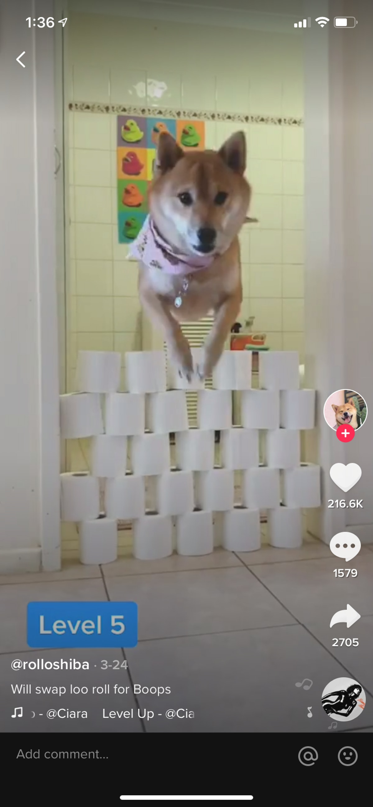 A dog leaps over a stack of toilet paper rolls for a TikTok challenge.