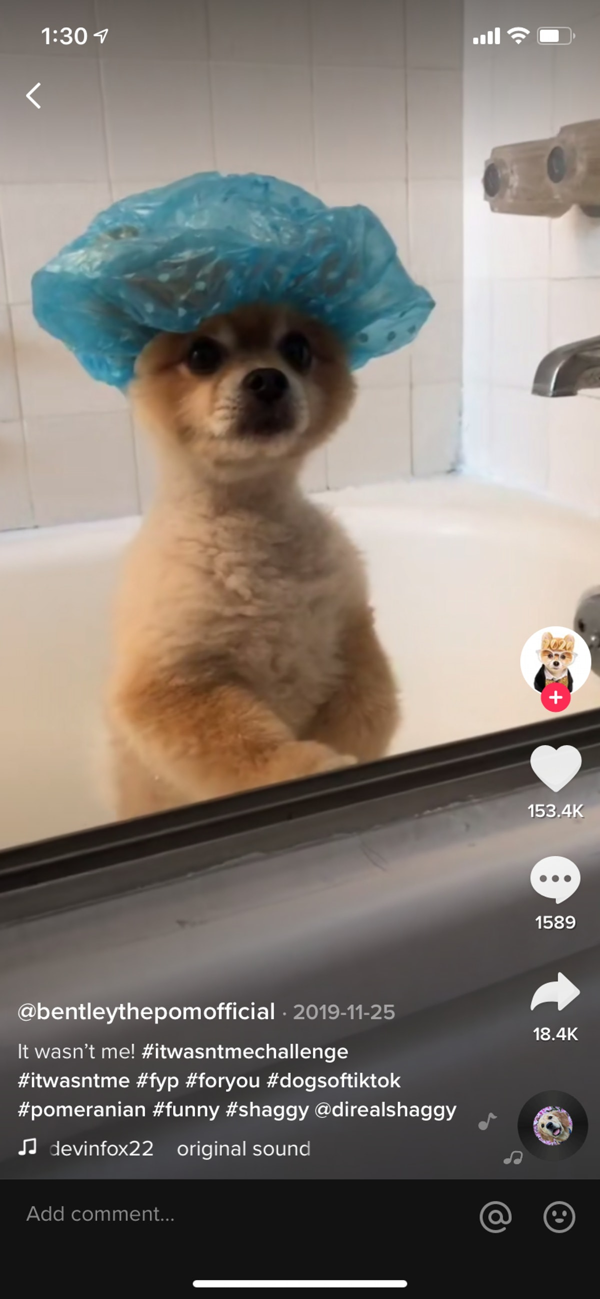 A dog sits in a bathtub while wearing a shower cap and recording a video for TikTok.