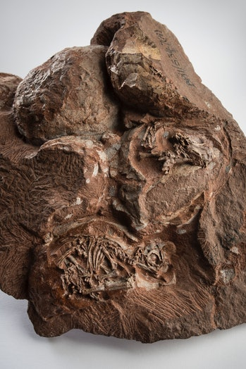 dinosaur eggs discovered in 1976 in Golden Gate Highland National Park, South Africa