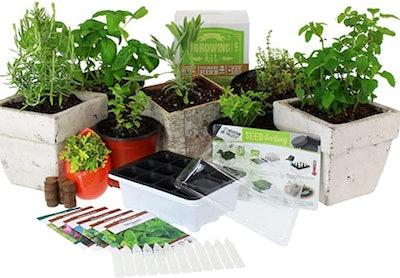 Mountain Valley Seed Company Medicinal & Herbal Tea Indoor Herb Garden Starter Kit
