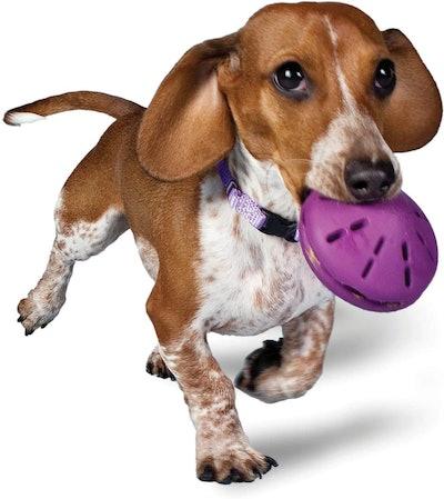 PetSafe Busy Buddy Twist 'n Treat, Treat Dispensing Dog Toy