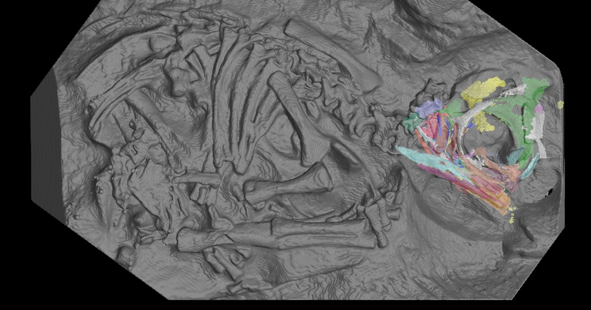 X-rays reveal a surprise inside 200 million-year-old dinosaur eggs