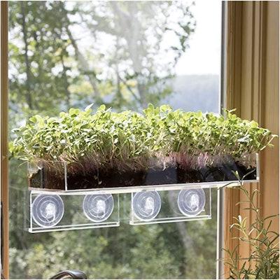 Window Garden Microgreens Bundle