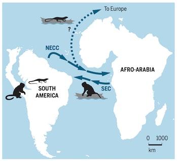 map showing monkeys traveling across Atlantic Ocean